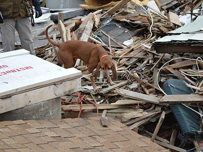 Dog Training Champaign Il